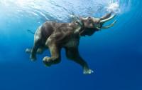 elefante-202