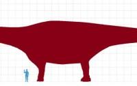 Titanosaurio gigante del Chubut comparado con una persona