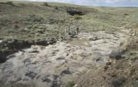 Marcas fosilizadas que podrían corresponder con un cortejo de terópodos hace cien millones de años