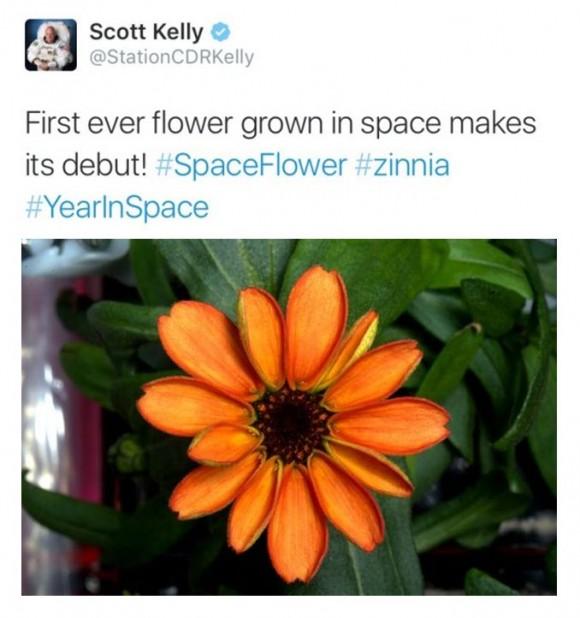 Tweet de Kelly Scott patinando al decir que es la primera flor en el espacio