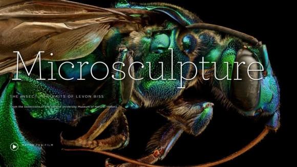 Microsculpture, exposición de Levon Biss en Oxford