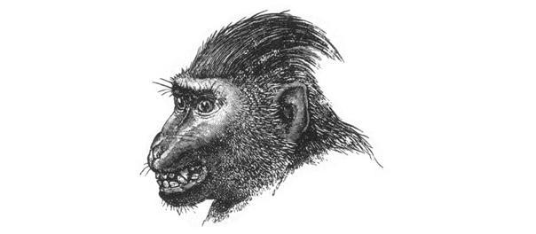 Hotentote dibujado por Darwin 1872
