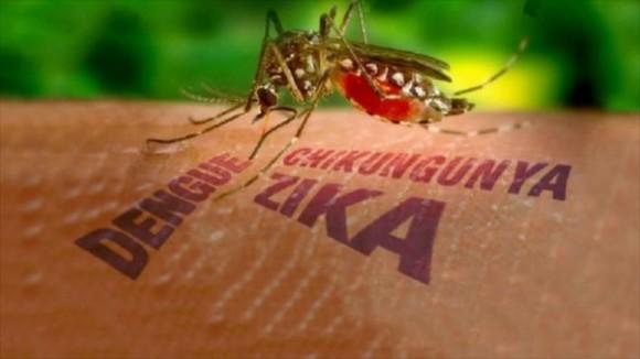 Mosquito Aedes Aegypti vector de diferentes enfermedades como el dengue, la fiebre amarilla o el Zika