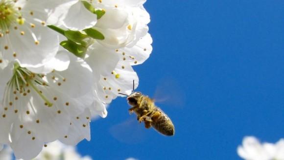 La desaparición de un solo insecto polinizador altera todo un ecosistema